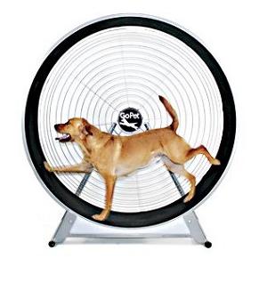 GoPet TreadWheel For Large Dogs